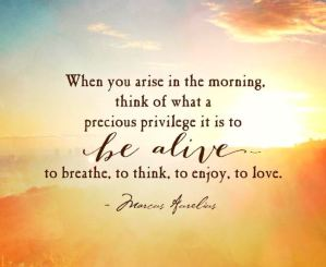 Aurelius Quote